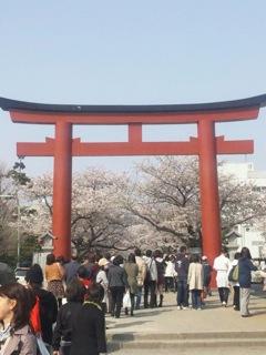 日本の桜「どうしてキレイだと思うか考えてみるともっと好きになってくる。」