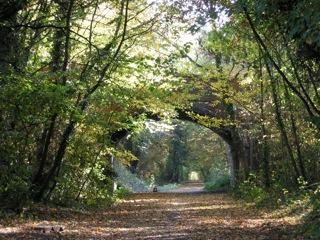 「人生初のホームステイ」英国のカントリーサイドで大自然を感じてきました。