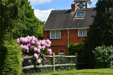 シャクナゲ Rhododendron