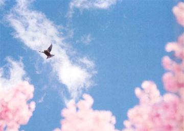 「詩の朗読コンテストと古文音読リレー」(1学期中2国語・高2古文オンライン授業レポート)①