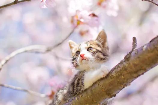 始まりの春の歌を詠む